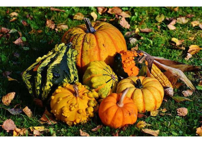 The Pumpkin Hunt