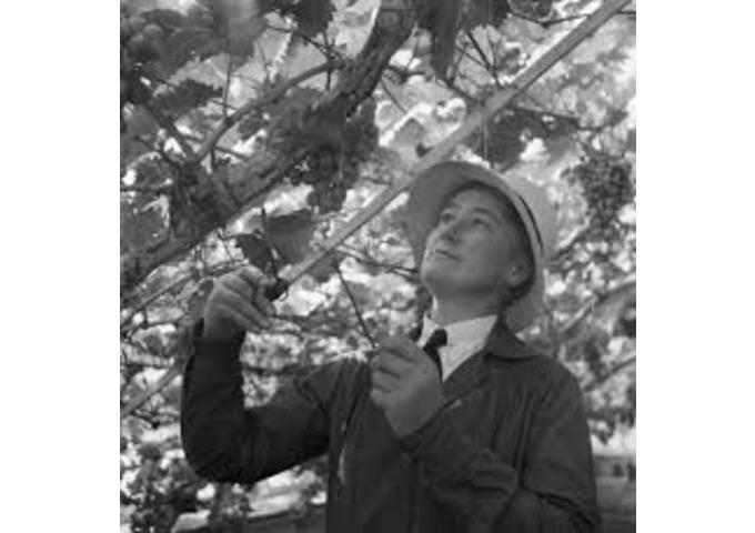 Women Gardeners 6: Beatrix Havergal