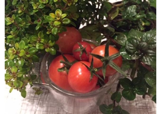 My Garden Kitchen - Garden Activity Day for Children