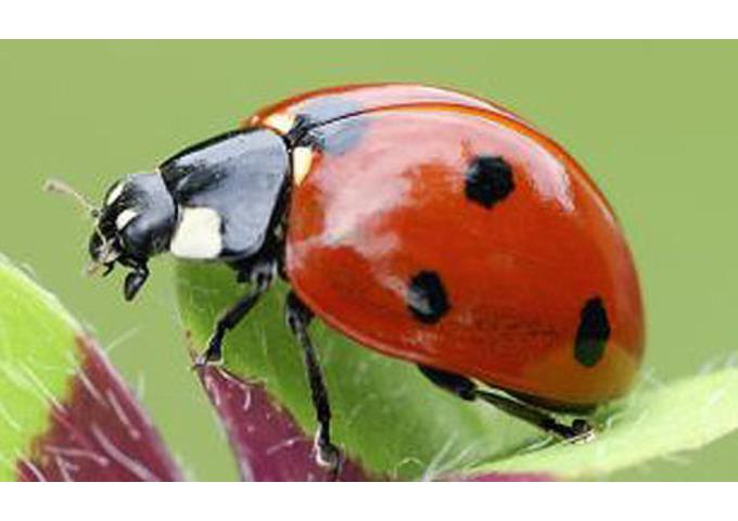 Big Garden Bug Trail