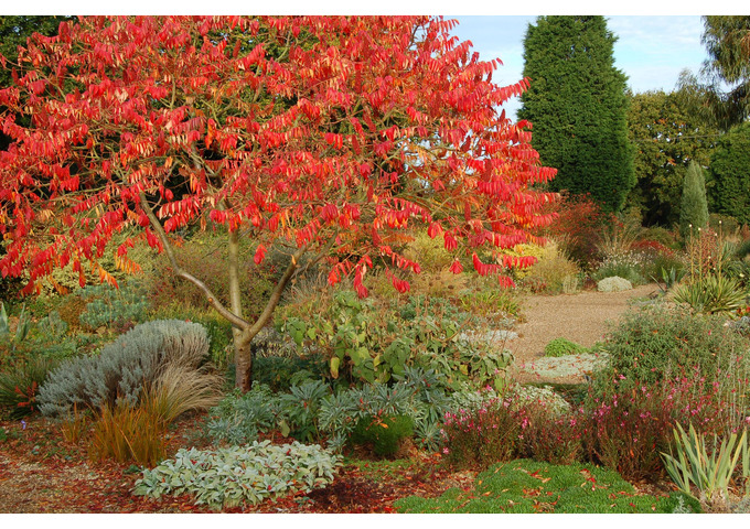 Autumn Practical Gardening Course - 7 weeks