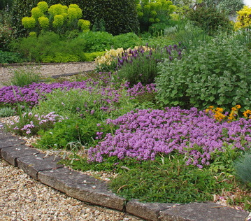 Plants for scree gardens