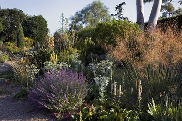 Plants for dry areas