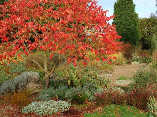 The Autumn Gravel Garden