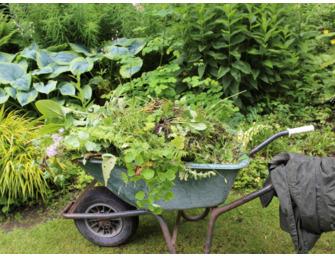 Gardening from Scratch - 12 week course