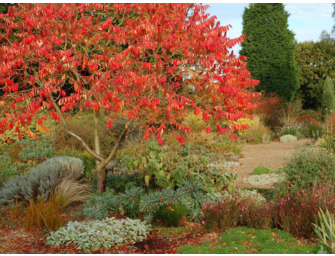 The Autumn Gravel Garden
