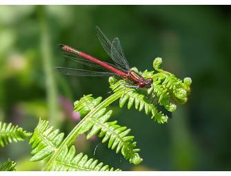 Getting to know your Garden Invertebrates
