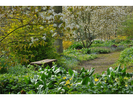 Designing with Plants for Practical Gardeners