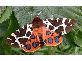 Moths & Owls - Garden Activity Morning for Children