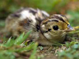 Wild Easter Eggs & Chick - Garden Activity Day for Children