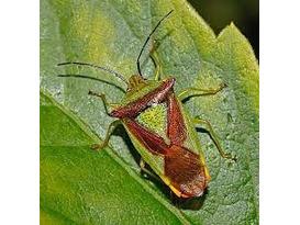 Bugs & Beasties - Garden Activity Day for Children