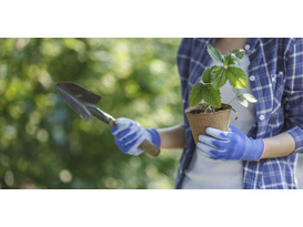 Gardening for Gardeners - a day out for gardeners and plantspeople
