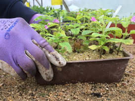 Hands on Propagation the Beth Chatto Way!