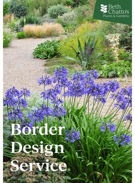 Border Design Service