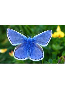 Beetle & Butterfly Art Club - Garden Activity Morning for Children