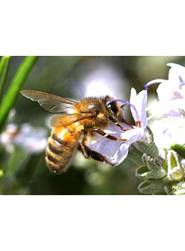 An Introduction to Beekeeping