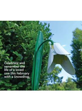St Helena Hospice Snowdrops