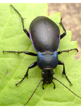 Minibeast Search Party - Garden Activity Morning for Children