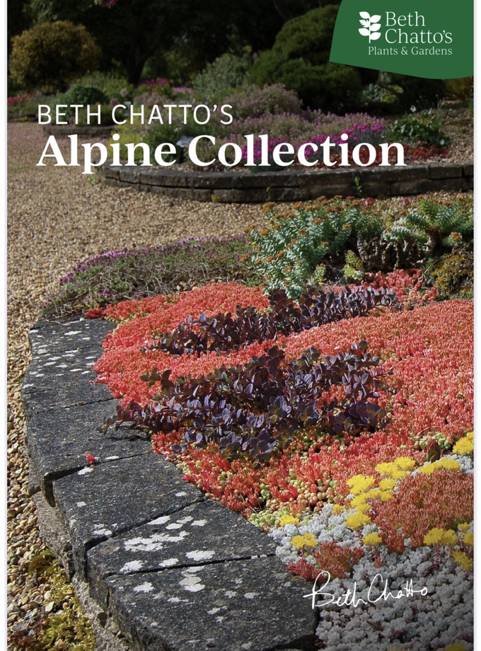 Beth Chatto's Alpine Collection