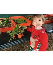 Beth Chatto Plants & Gardens Christmas Fayre